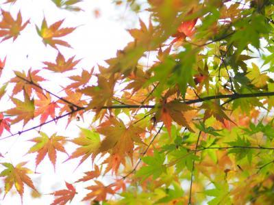 広島県北紅葉 11月5日
