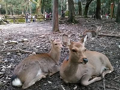 急に思い立って奈良へ。春日大社~二月堂~東大寺。奈良観光(2017/11/23)