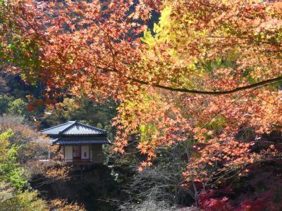 行道山浄因寺の紅葉_2017_境内の紅葉が見頃です。(栃木県・足利市)