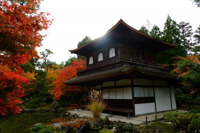 京都 ひたすら寺院を巡り紅葉をめでる一人旅(その9)