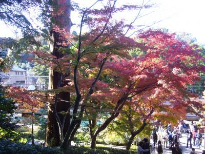 鎌倉の古寺に紅葉を尋ねて
