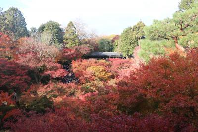 観たいのは、本当に紅葉かい??京都3日間の旅