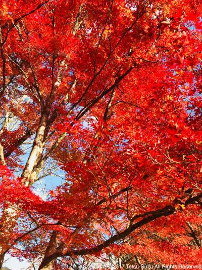 紅葉真っ盛り!香嵐渓へ弾丸旅!