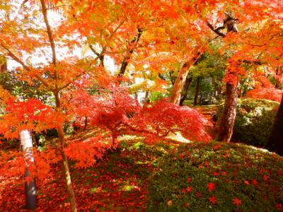 素晴らしい鮮やかな紅葉に感動です。