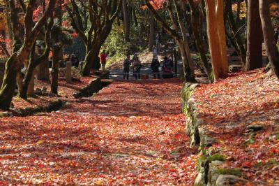 近江路の紅葉巡りに行ってきました! マキノ高原メタセコイア並木~鶏足寺~西明寺~永源寺のライトアップ