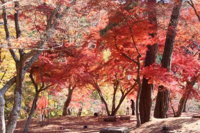 長瀞 月の石もみじ公園の紅葉