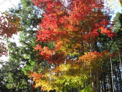 箱根仙石原のホテルハーヴェスト箱根甲子園で紅葉と温泉を満喫