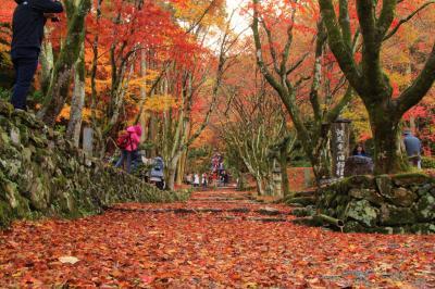 滋賀県の紅葉巡り①散紅葉の赤絨毯・鶏足寺2017年11月