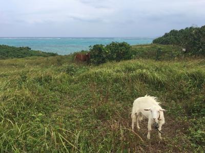 強風決行! 小浜島ツーリング