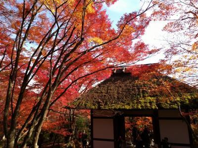 京都の紅葉2018 嵐山~高台寺
