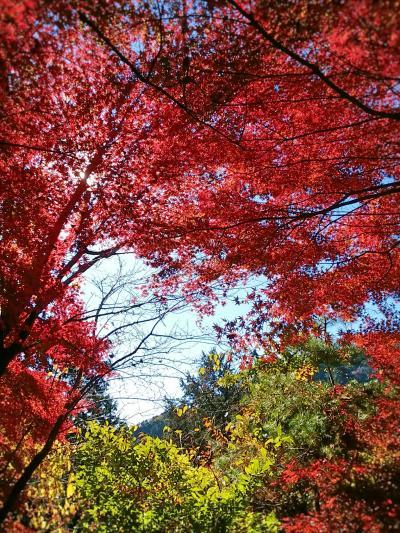 紅葉真っ盛り!トリッキーな高尾山
