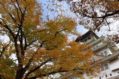 2017 大阪城の紅葉散歩