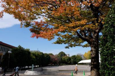 東京国立博物館 庭園 紅葉散策