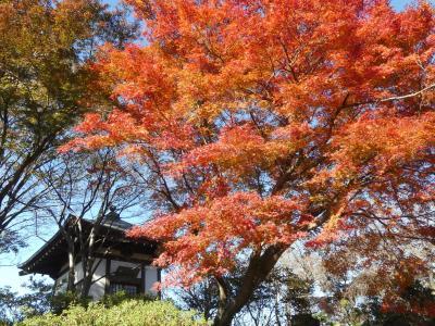 常楽寺の紅葉_2017_多くはありませんが見頃で綺麗でした。(群馬県・太田市)