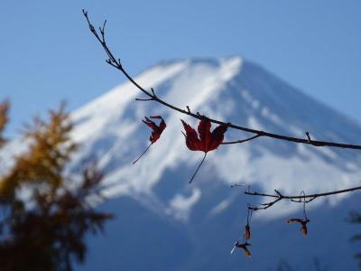 【富士吉田】紅葉最高の日本晴れ♪猿橋・忠霊塔・ふじやま温泉・小菅