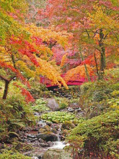 紅葉とおいしいものを探して、熱海列車旅☆