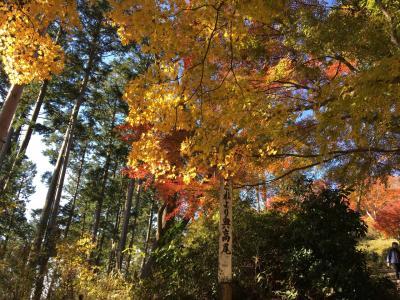 高尾山から景信山へ 紅葉ハイキング