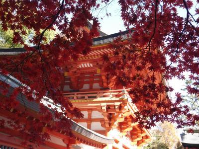 大宮氷川神社、大宮公園の紅葉☆蕎麦 あざみ☆2017/11/24