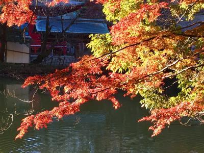 朝の公園散歩 井の頭公園の紅葉 2