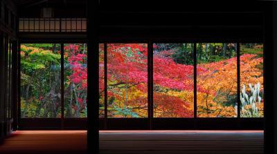 ほんとは滋賀の旅。寄り道京都が良すぎた件。 【京都・滋賀紅葉2017】