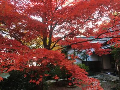 2017年 秋の京都 直指庵へ