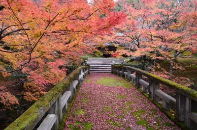 錦秋の京都 北野天満宮もみじ苑特別公開からしょうざんリゾート京都