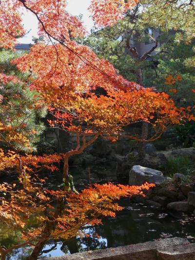 物外軒の紅葉_2017_落葉が始まっていますが、まだ綺麗です。(栃木県・足利市)