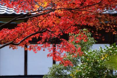 2017 京の紅葉散歩 吟松寺