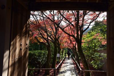 2017 京の紅葉散歩 光悦寺