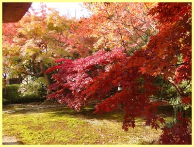 2017年 鎌倉で紅葉探し