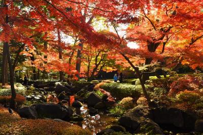 2017年大田黒公園の紅葉風景