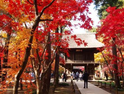 <埼玉新座市・平林寺>そこには色が溢れていた・・・絶景の紅葉寺「天然記念物の境内林」