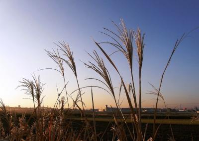 早朝ウォーキングコース沿いも秋の装い・・・今朝は快晴・木々は紅葉・野草はセピア色で素晴らしい姿で