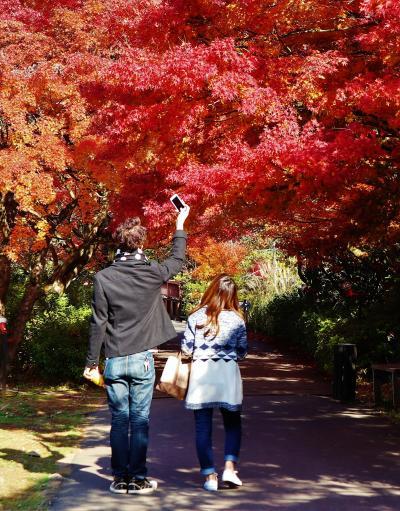 修善寺・虹の里 紅葉真っ盛り