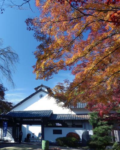 草雲美術館の紅葉_2017_落葉が始まっています(栃木県・足利市)