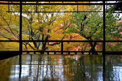 錦秋の京都 入場制限のある瑠璃光院 下賀茂神社