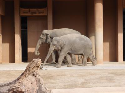 ★東山動物園