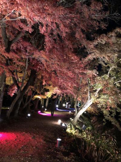 夜の大覚寺を歩いてみた
