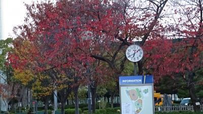 早朝散歩 天神川の左岸をスポーツセンターまで歩き、帰りは市バスで戻りました 下巻。
