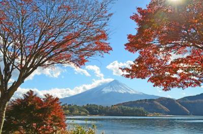 山梨県・富士五湖方面へ =5.大石公園~もみじトンネル=2017.11.19