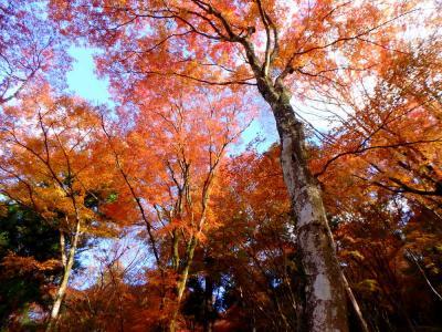 紅葉見ごろの香嵐渓と和紙の町 美濃