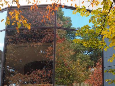トーハク秋の庭園開放 その2