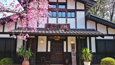 初体験、栃木の藤棚と群馬のSL (8-8) 猿ヶ京温泉 旅籠屋丸一で温泉と夕食を満喫