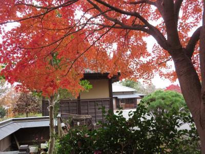 本郷ふじやま公園の紅葉