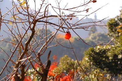 晩秋の房総、濃溝の滝~亀山湖~養老渓谷の紅葉をめぐる・・・