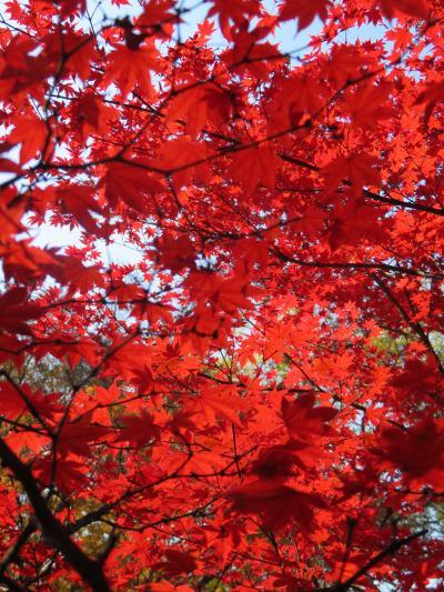 京都の紅葉ー北野天満宮のもみじ苑ー