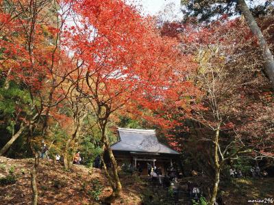 関西の紅葉めぐり2017(1)湖北の紅葉の名所:鶏足寺・石道寺