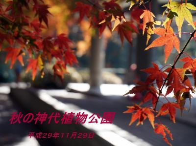 秋の神代植物公園と深大寺