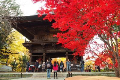 駅徒歩1分都心の京都 紅葉の九品仏浄真寺