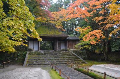 錦秋の京都 哲学の道から法然院、紅葉の季節のみ公開される安楽寺、霊鑑寺。